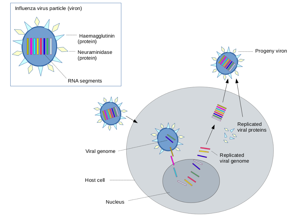Sequencing Human Viruses