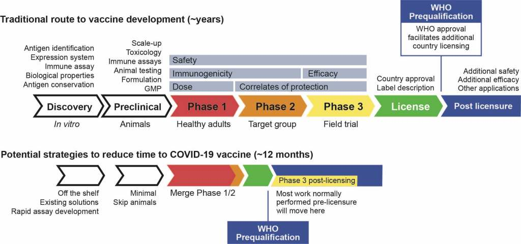 the classical path to vaccine licensing (5). This is a standard model but it has flexibility