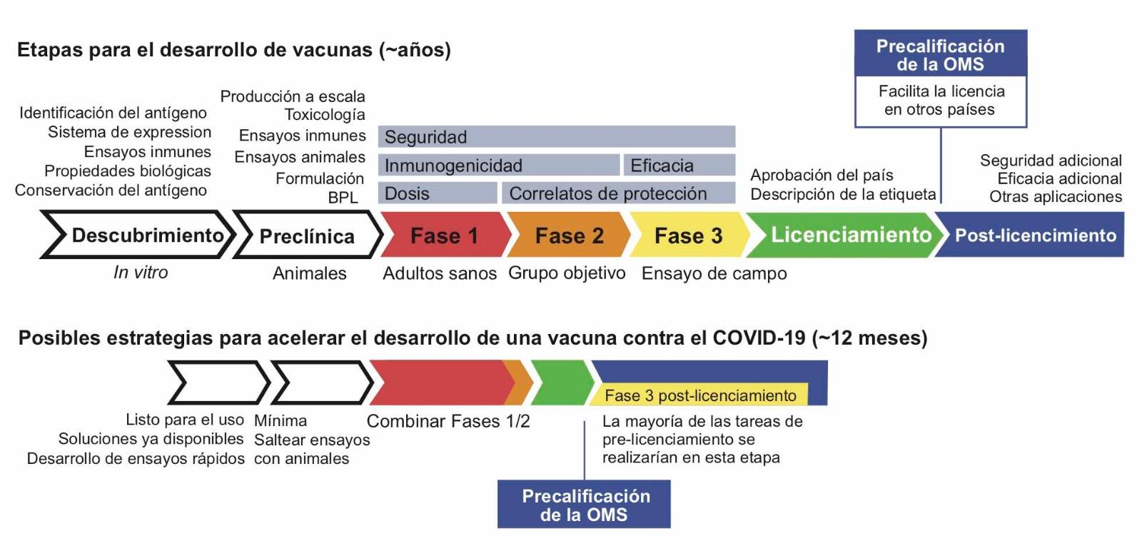 Etapas para la obtención de licencias para vacunas