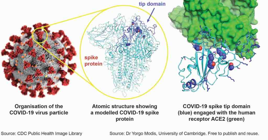 Structure of SARS-CoV-2 and the spike protein