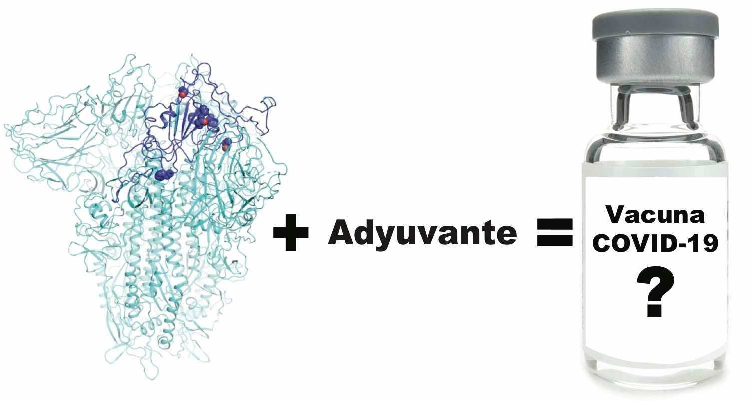 Formulación de la vacuna