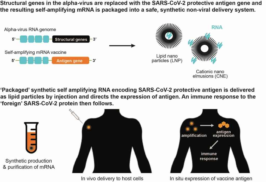 Self-amplifying mRNA vaccines delivered using with non-viral systems