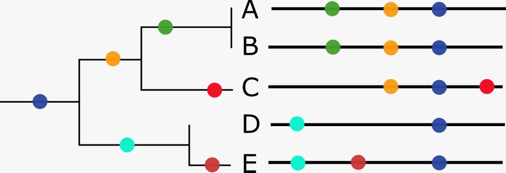 Diagram of a phylogenetic tree in the early stage from Nextstrain