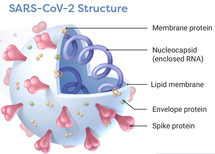 Components of SARS-CoV-2