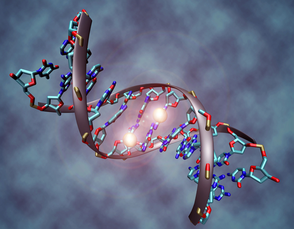 Epigenetics | Summary