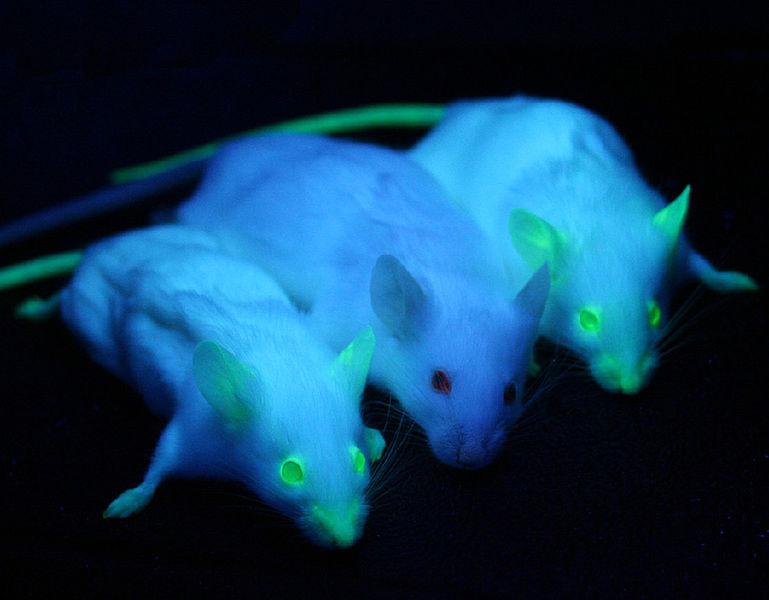 Transgenic animals | Summary